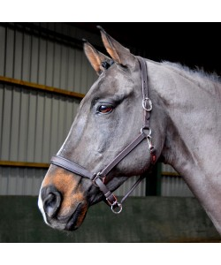 HC054 - Ready to Ride Headcollar