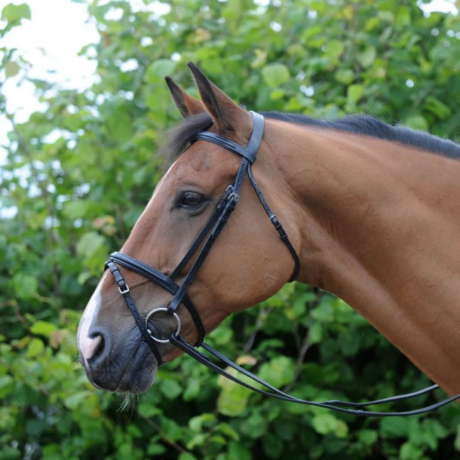 IFB - Whitaker Elland Flash Bridle