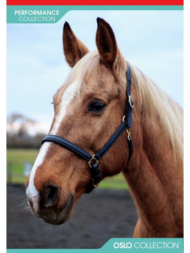 HC062 - Oslo Soft Leather Headcollar