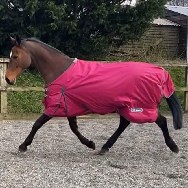R216 Whitworth 50g Turnout Rug