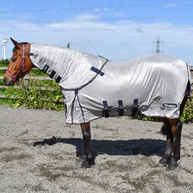 R244 Airton Fly Rug in pearl
