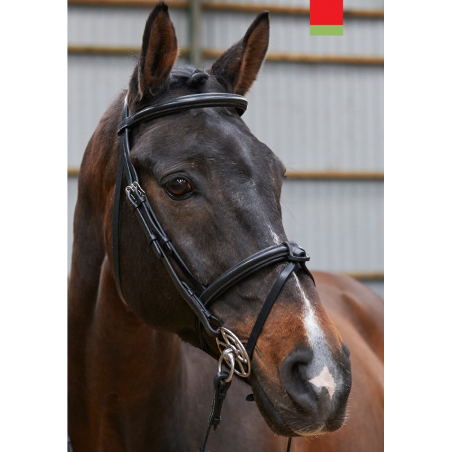 BR051 - Eastwood Raised Flash Bridle