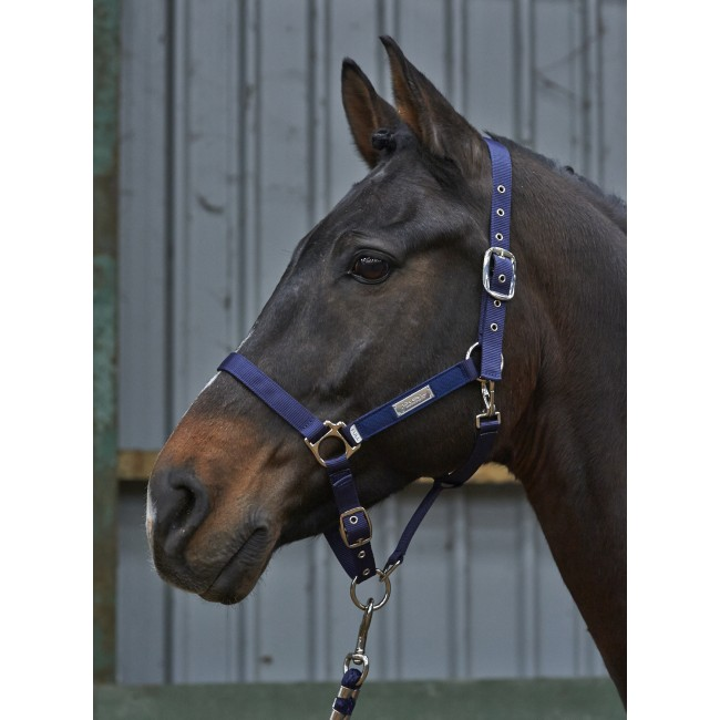 HC027- Signature Plaque Head Collar