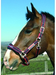 WHCS - Airflow Head Collar Set
